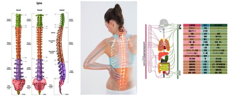 姿勢の乱れは内臓やメンタルにも影響する